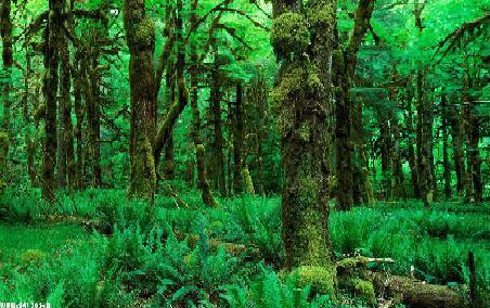 دانلود تحقیق درباره جنگل