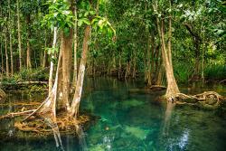 جنگل های مانگرو